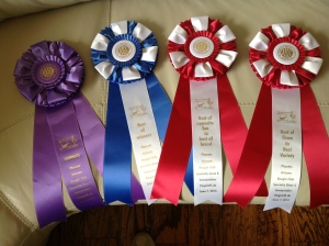 Meg and her ribbons .  Won BOS in show at the Phoenix Specialty.