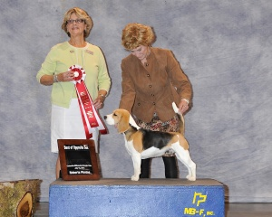 GCH Miss Terabyte at CWBC